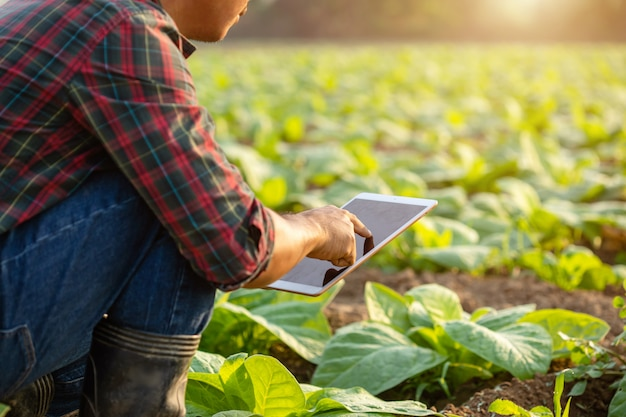 Aziatische jonge landbouwer die op het gebied werkt