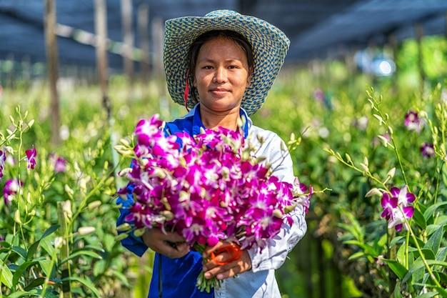 Aziatische kleine bedrijfseigenaar van orchidee het tuinieren landbouwbedrijf