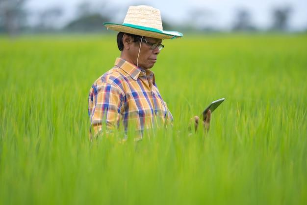 Aziatische landbouwer die digitale tablet in een groen padieveld gebruikt