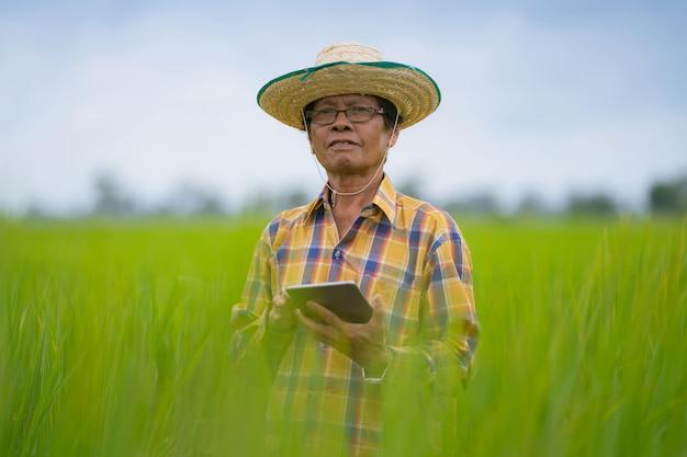 Aziatische landbouwer die digitale tablet in een groen padieveld, het slimme concept van de technologielandbouw gebruiken