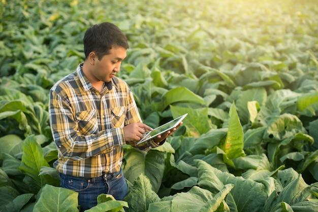 Aziatische landbouwer die installatie in tabakslandbouwbedrijf onderzoekt