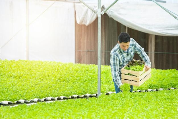 Aziatische landbouwersmens die in serre hydroponic landbouwbedrijf werkt