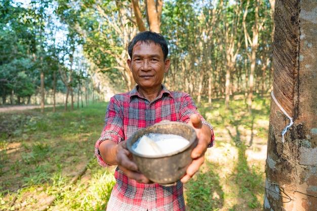 Aziatische man senior farmer, aziatische man boer in rubberplantages