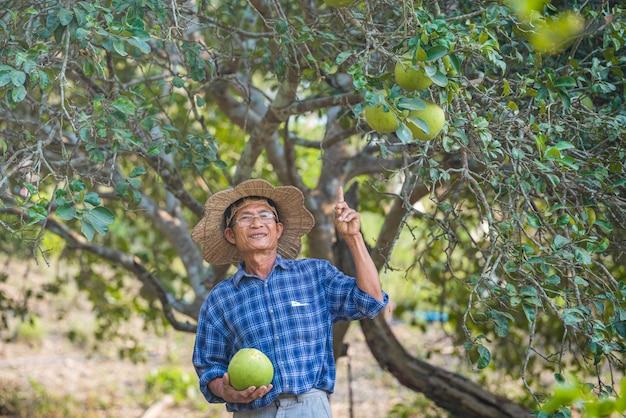 Aziatische man senior farmer holding grapefruit aziatische man boer op lege kopie ruimte