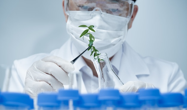 Aziatische mannelijke onderzoeker die plantspecimens onderzoekt in het laboratorium.