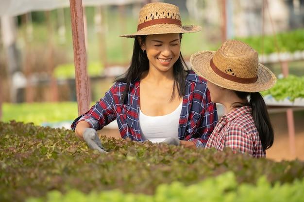 Aziatische moeder en dochter helpen samen om de verse hydrocultuurgroente op de boerderij te verzamelen, concepttuinieren en kindereducatie van huishoudelijke landbouw in gezinslevensstijl.