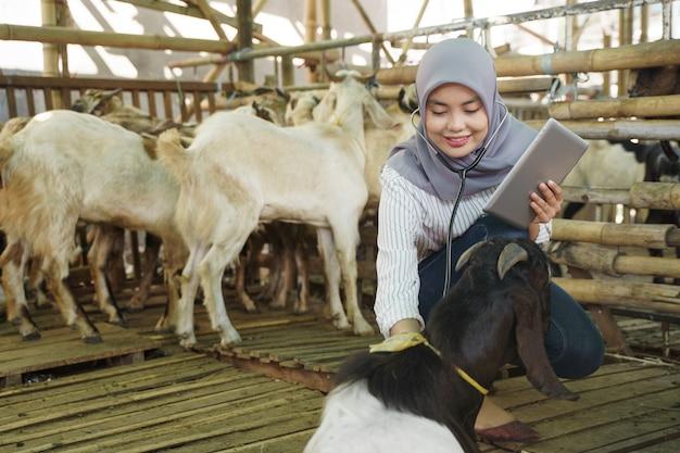 Aziatische moslim dierenarts medische check-up boerderijdier. arts controleer de gezondheid van de geit