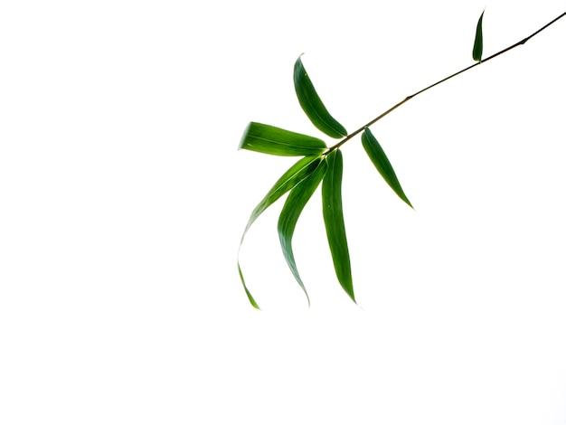 Aziatische natuurlijke achtergrond met bamboe