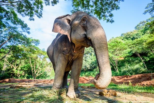 Aziatische olifant in aardpark, chiang-mai, thailand