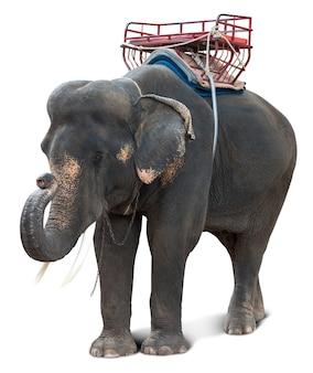 Aziatische olifant voor de natuurlijke toeristenreis van thailand op wit met het knippen van weg