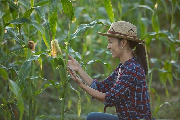 Aziatische vrouw boer met digitale tablet in maïsveld, mooie ochtend zonsopgang boven het maïsveld. groen maïsveld in landbouwtuin en licht schijnt zonsondergang in de avond bergachtergrond evening