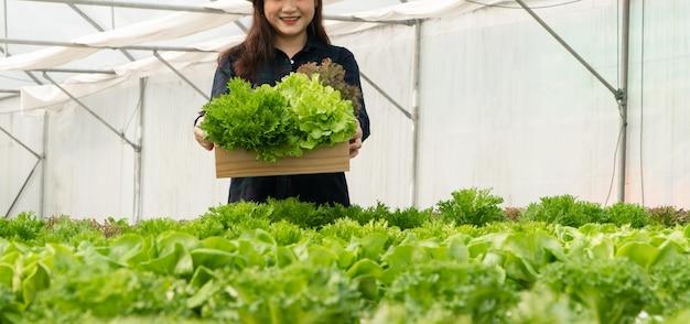 Aziatische vrouw boeren oogsten verse salade groenten in hydrocultuur plantensysteem boerderijen in de kas naar de markt.