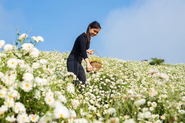 Aziatische vrouw die chrysantenbloemen plukt in de berg. een meisje vindt bloem om het buiten in de mand te houden.