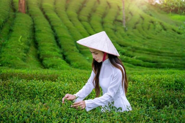 Aziatische vrouw die de cultuur van vietnam traditioneel in theeaanplanting draagt