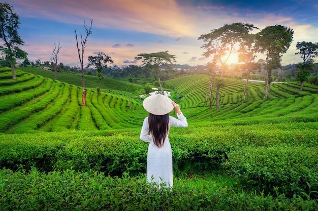 Aziatische vrouw die de cultuur van vietnam traditioneel in theeaanplanting in chiang rai, thailand draagt