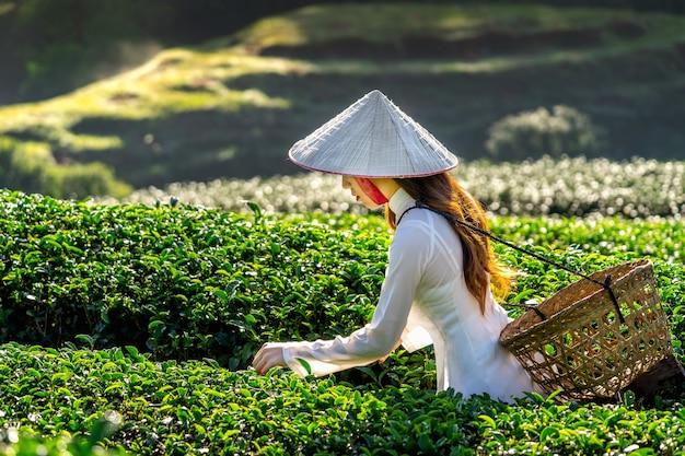 Aziatische vrouw die de cultuur van vietnam traditioneel op groen theegebied dragen.
