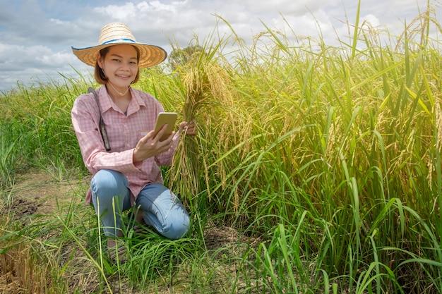 Aziatische vrouwelijke landbouwerszitting die gelukkig gouden oren en smartphone houden