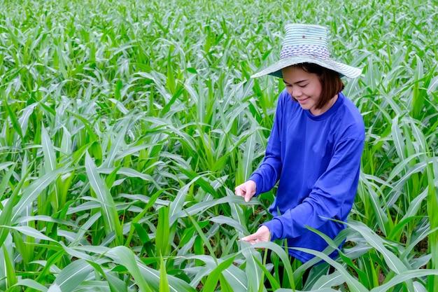 Aziatische vrouwenlandbouwers die groen blad kijken en zich in graanlandbouwbedrijf bevinden in thailand