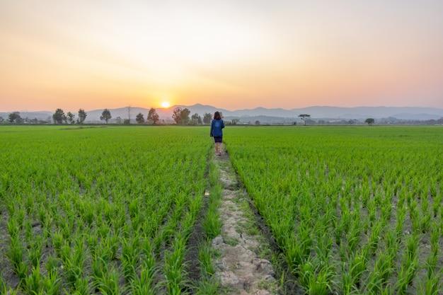 Aziatische vrouwentoerist die groen padieveld over zonsondergang bekijkt die door de bergen glanst.