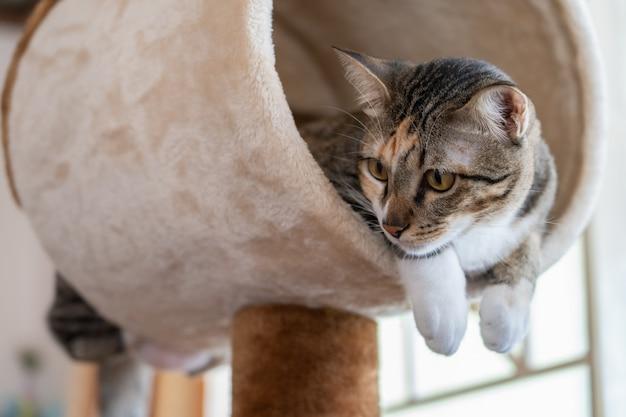 Kattenboom-foto's, 20+ gratis stockfoto's van hoge kwaliteit
