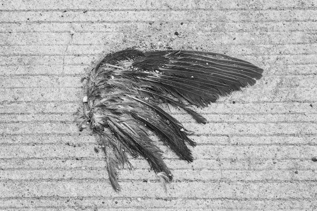 B&w de overblijfselen van een vogelvleugel op de betonnen vloer
