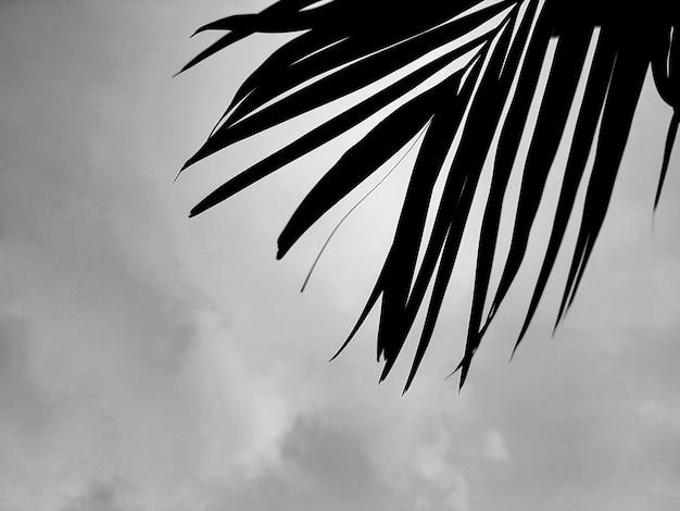 B & w silhouet palmbladeren