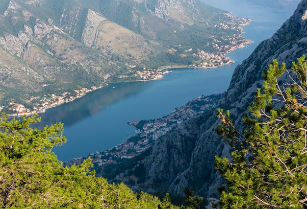 Baai van kotor zomer mistige uitzicht van bovenaf met dennenbos op helling (montenegro)