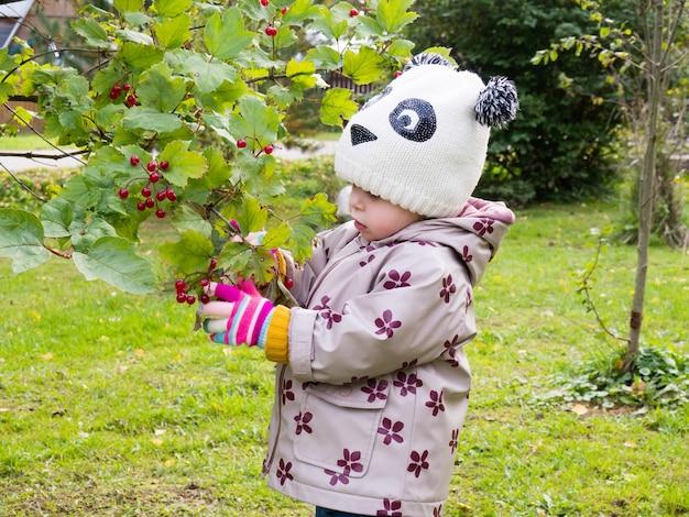 Baby (een jaar oud) plukt een rode viburnumbes in de tuin