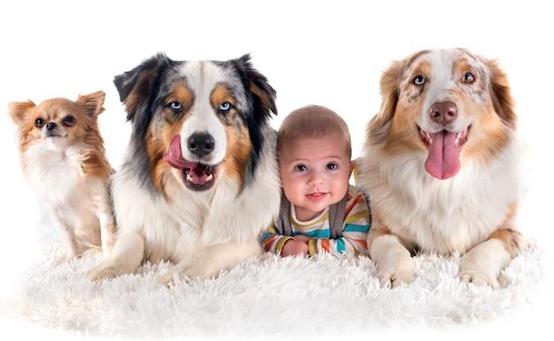Baby en honden