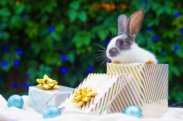 Baby konijn in geschenkdoos en blauwe ballen voor kerstmis op groen