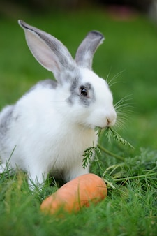 Baby konijn in gras. zomerdag