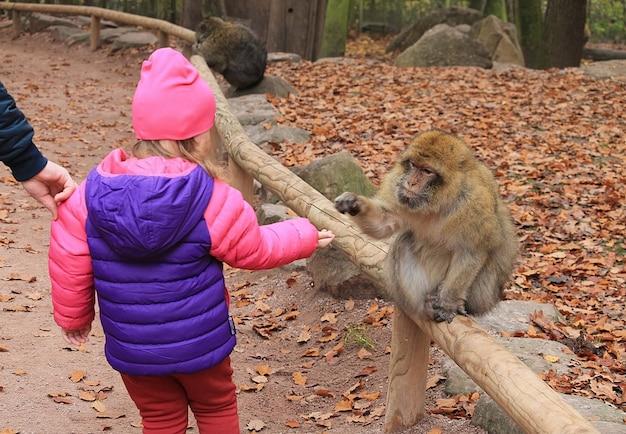 Baby met een aap. dieren voederen. een meisje in een felroze-paars jasje voert een aap in het reservaat.