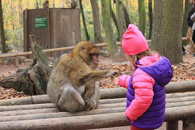 Baby met een aap. dieren voederen. een meisje voert een aap in het reservaat.
