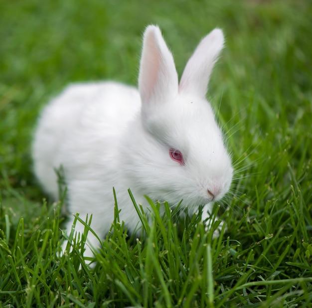 Baby wit konijn in de lente groen gras achtergrond.