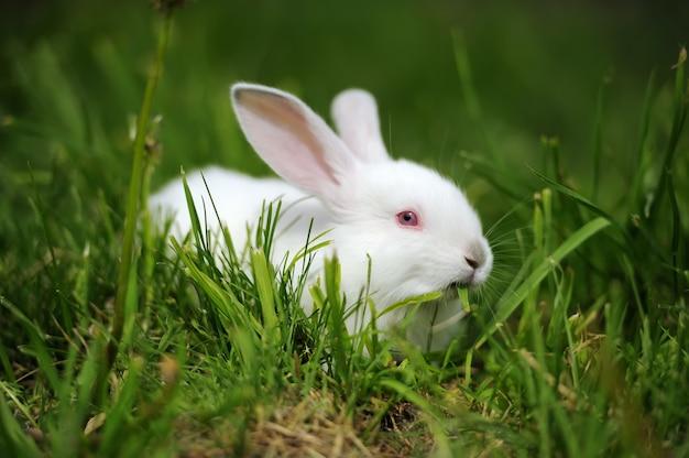 Baby wit konijn in lentegroen gras