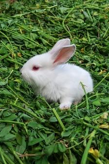 Baby wit konijn in weide