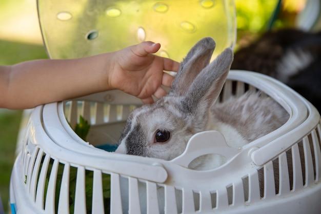 Babyhand die een decoratief dwergkonijn aait in een draagmand