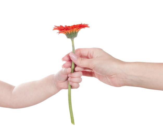Babyhand die rode bloem houden
