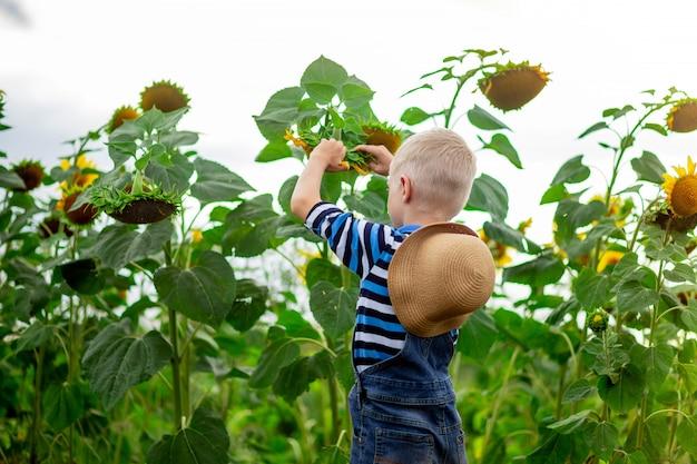 Babyjongen blond staat in een veld met zonnebloemen in de zomer