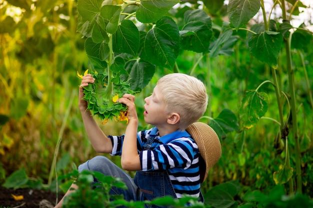 Babyjongen blonde zittend in een veld met zonnebloemen in de zomer