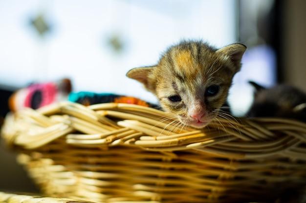 Babykat slaapt thuis in mand