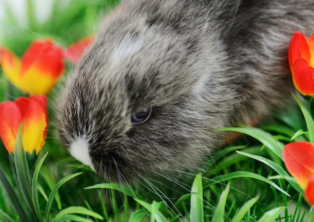 Babykonijn in gras met exemplaarruimte die wordt geïsoleerd