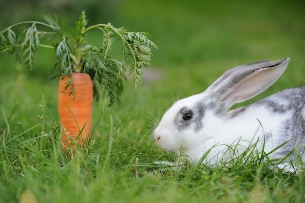Babykonijn in gras. zomerdag