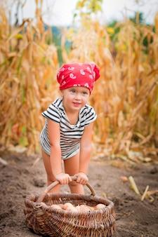 Babymeisje op de tuin met oogst van aardappels in de mand dichtbij gebied van droge maïs