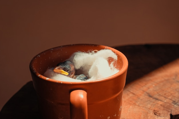 Babyvogel levend in een mok