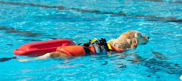 Badmeester hond