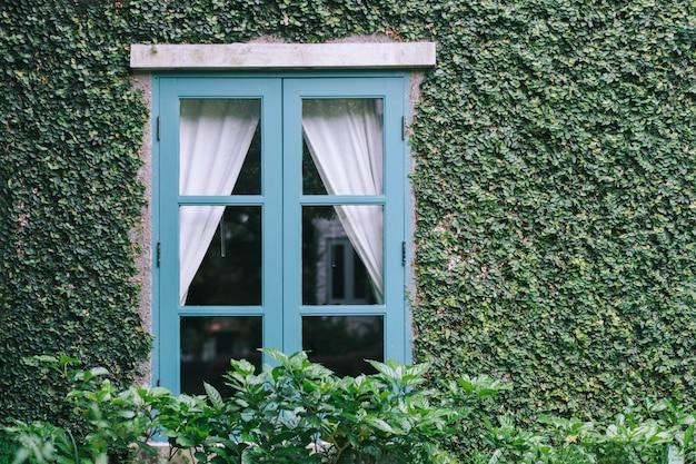 Bakstenen muur en raam bedekt met groene klimplant