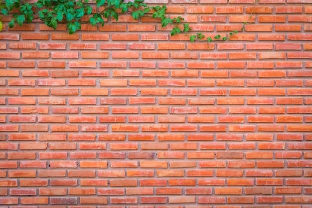 Bakstenen muur met kruipende plant Premium Foto