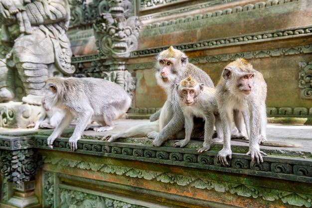 Balinese apen met lange staart in het heiligdom