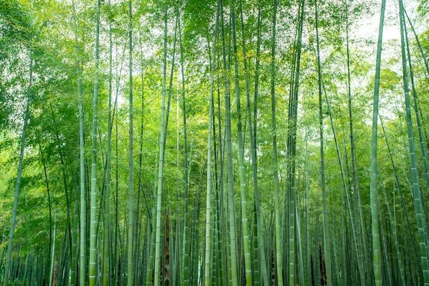 Bamboe bomen bos gebladerte
